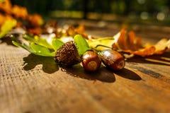 Folhas do carvalho no outono Fotografia de Stock