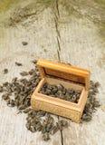 Folhas do chá verde Imagem de Stock