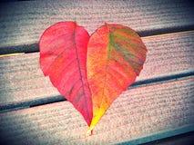Folhas do coração da queda fotos de stock