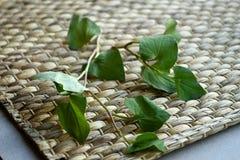 Folhas do cordata do Houttuynia da hortelã dos peixes isoladas na esteira do rattan imagem de stock royalty free