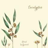 Folhas do eucalipto da aquarela Ilustração do Vetor