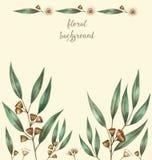 Folhas do eucalipto da aquarela Ilustração Stock