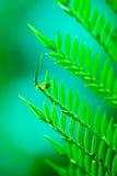 Folhas do Fern Fotos de Stock