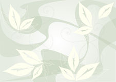Folhas do fundo Fotos de Stock Royalty Free