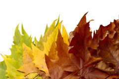 Folhas do fundo, cores do outono Imagens de Stock Royalty Free