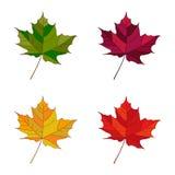 Folhas do grupo do outono do vetor As folhas ajustaram o jardim floral da cor do elemento Foto de Stock Royalty Free