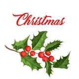 Folhas do ilex do visco do azevinho do Natal do vetor Imagens de Stock Royalty Free