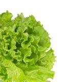 Folhas do lettucel verde. Imagem de Stock