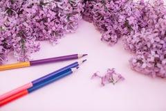 Folhas do lilás limpo branco das flores do papel e da mola, em um fundo do fundo da cor Foto de Stock Royalty Free
