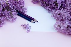 Folhas do lilás limpo branco das flores do papel e da mola, em um fundo do fundo da cor Fotos de Stock