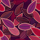 Folhas do Lilac Imagem de Stock