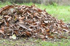 Folhas do lixo Fotografia de Stock
