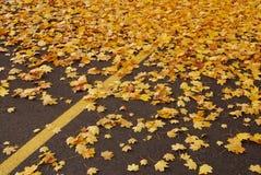 Folhas do lote de estacionamento fotografia de stock