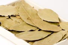 Folhas do louro Imagens de Stock