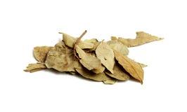 Folhas do louro Foto de Stock