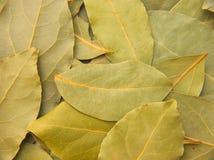 Folhas do louro Foto de Stock Royalty Free