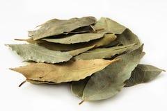 Folhas do louro em pálido Foto de Stock Royalty Free