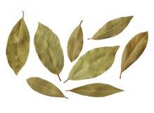Folhas do louro isoladas no fundo branco Fotos de Stock