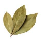 Folhas do louro isoladas no fundo branco foto de stock royalty free