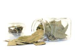Folhas do louro no frasco Foto de Stock Royalty Free