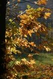 Folhas do luminoso fotografia de stock royalty free