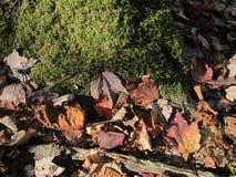Folhas do musgo e da queda Fotografia de Stock Royalty Free