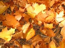 Folhas do ouro Imagens de Stock Royalty Free