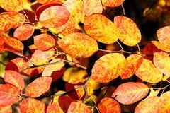 Folhas do outono Fotos de Stock