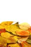 Folhas do outono Fotos de Stock Royalty Free