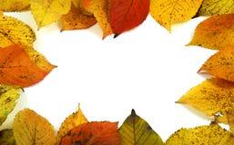 Folhas do outono Foto de Stock