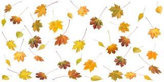 Folhas do outono Fotografia de Stock Royalty Free