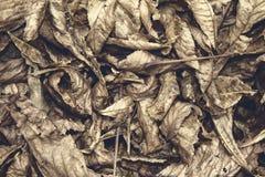 Folhas do outono Fotografia de Stock