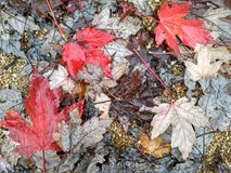 Folhas do outono Imagens de Stock Royalty Free