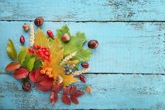 Folhas do outono com bagas Foto de Stock Royalty Free