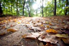 Folhas do outono na terra Imagem de Stock