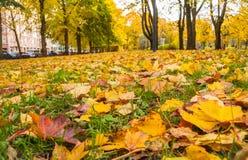 Folhas do outono na terra no parque imagem de stock