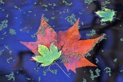 Folhas do outono no whater fotos de stock