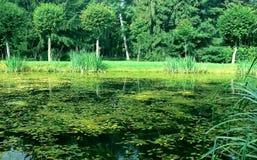 Folhas do pântano e do bastão Imagem de Stock