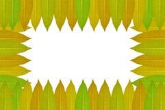 Folhas do Plumeria no fundo branco Imagens de Stock Royalty Free