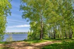 Folhas do rio do bosque do vidoeiro fotografia de stock royalty free