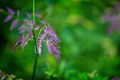 Folhas do roxo no fundo verde Imagem de Stock