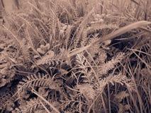 Folhas do Sepia imagem de stock royalty free