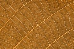 Folhas do Sepia Imagem de Stock