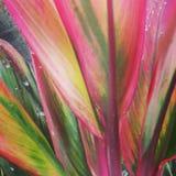 Folhas do si Foto de Stock