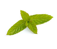 Folhas do Spearmint Fotos de Stock