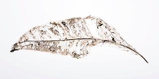 Folhas do sumário foto de stock
