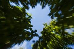 Folhas do sumário com céus Imagens de Stock