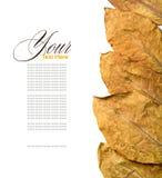 Folhas do tabaco fotografia de stock