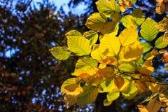Folhas do tempo do outono Foto de Stock Royalty Free