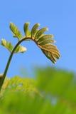Folhas do tiro no fundo do céu Imagens de Stock